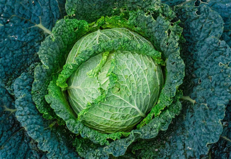 Superfoods groenten boerenkool
